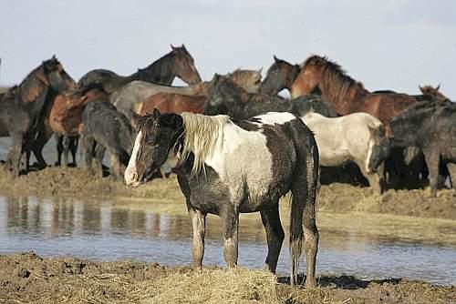 Cavallo Salvato da Acqua