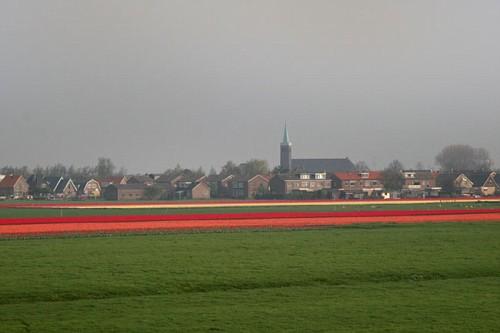 Campo Tulipani Rossi