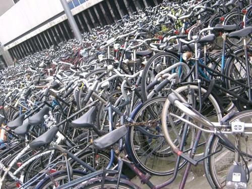 Le Bici di Amsterdam, tantissime