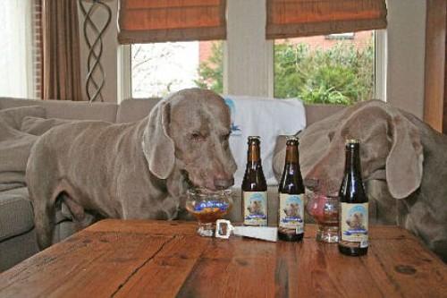 Kwispelbier, dall'Olanda la birra che piace ai cani